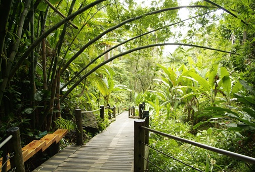 Boardwalk at Hawaii Tropical Botanical Garden