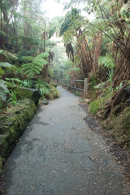 thurston lava tube on Hawaii volcanoes national park