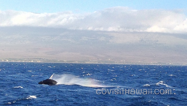humpback whale calf with iphone