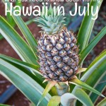 visiting hawaii in july