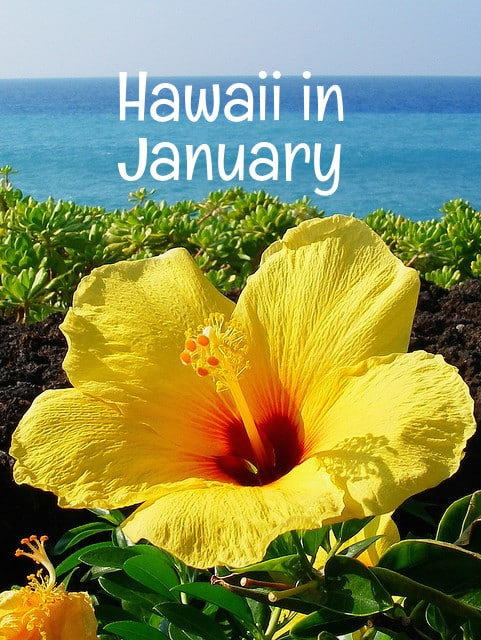 What To Know About A January Vacation In Hawaii Go Visit