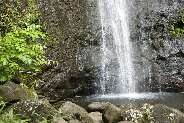 base of manoa falls