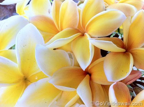 Hawaii cruise wedding?