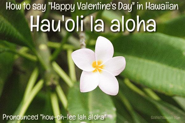 happy-valentines-hawaiian