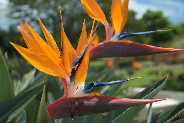 bird of paradise from punchbowl