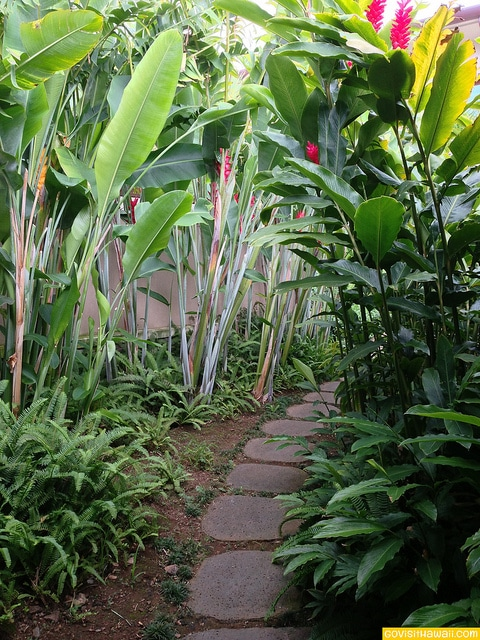 Ginger and fern lined path on the grounds of Kapalua Spa
