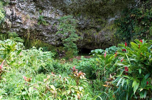 Fern Grotto Wedding