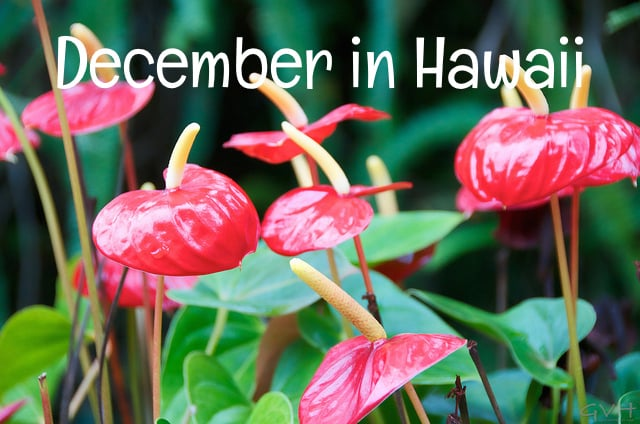 december in hawaii