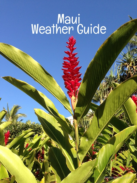 maui weather guide