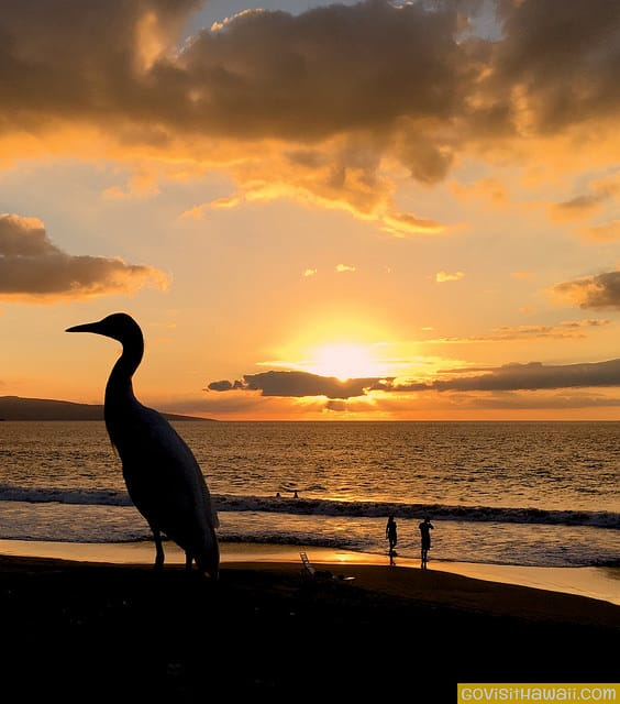 Even the birds in Hawaii stop to enjoy sunset. We took this bird photo at Polo Beach, Maui.