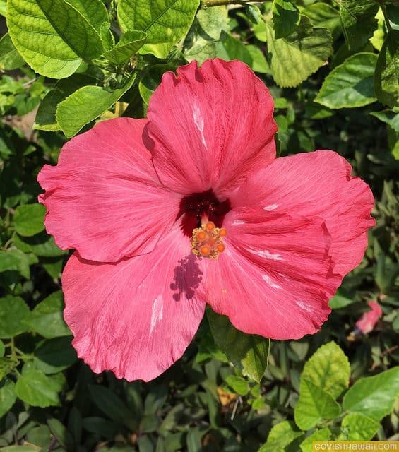Hawaii Vacation News Deals July Go Visit Hawaii - Hawaii vacation packages 2016