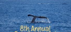 Go Visit Hawaii's 8th annual contest to predict the season's 1st humpback whale sighting