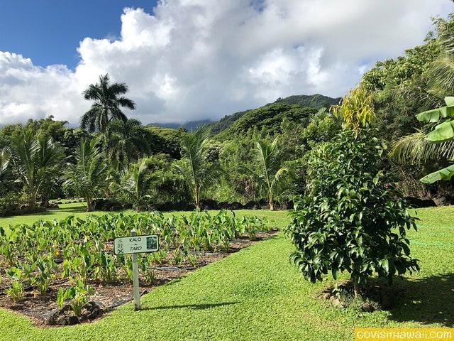 Review: Taste of Kualoa Farm Trolley Tour