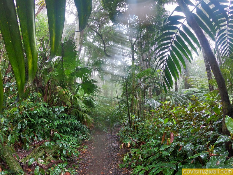 Hiking through the captivating Kona Cloud Forest